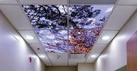 Фотопотолок в офисе. небо с деревьями